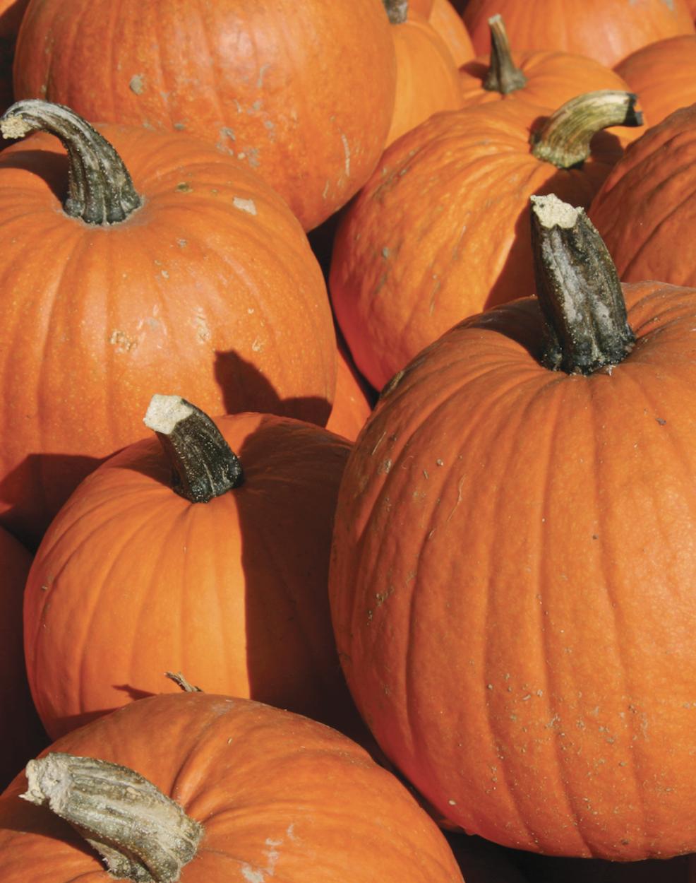 Multi-Purpose Pumpkins