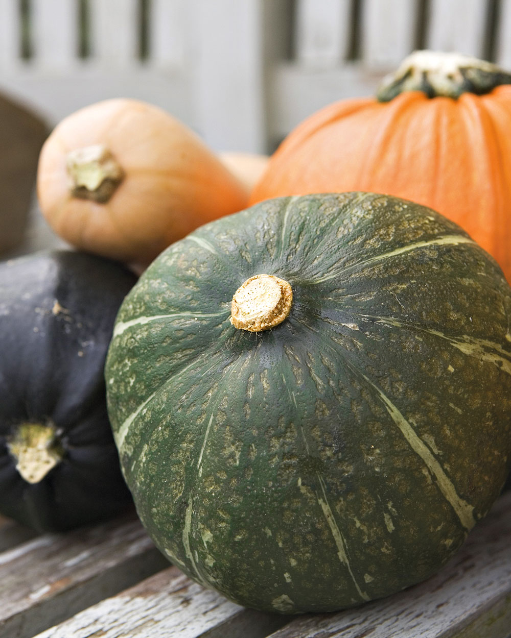 Color Your Menus with Nutritional Winter Squash