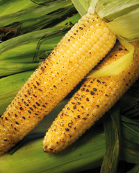 Simple Grilled Corn on the Cob